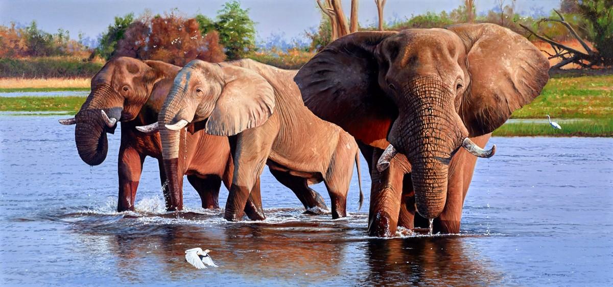 Elephants on the Khwai